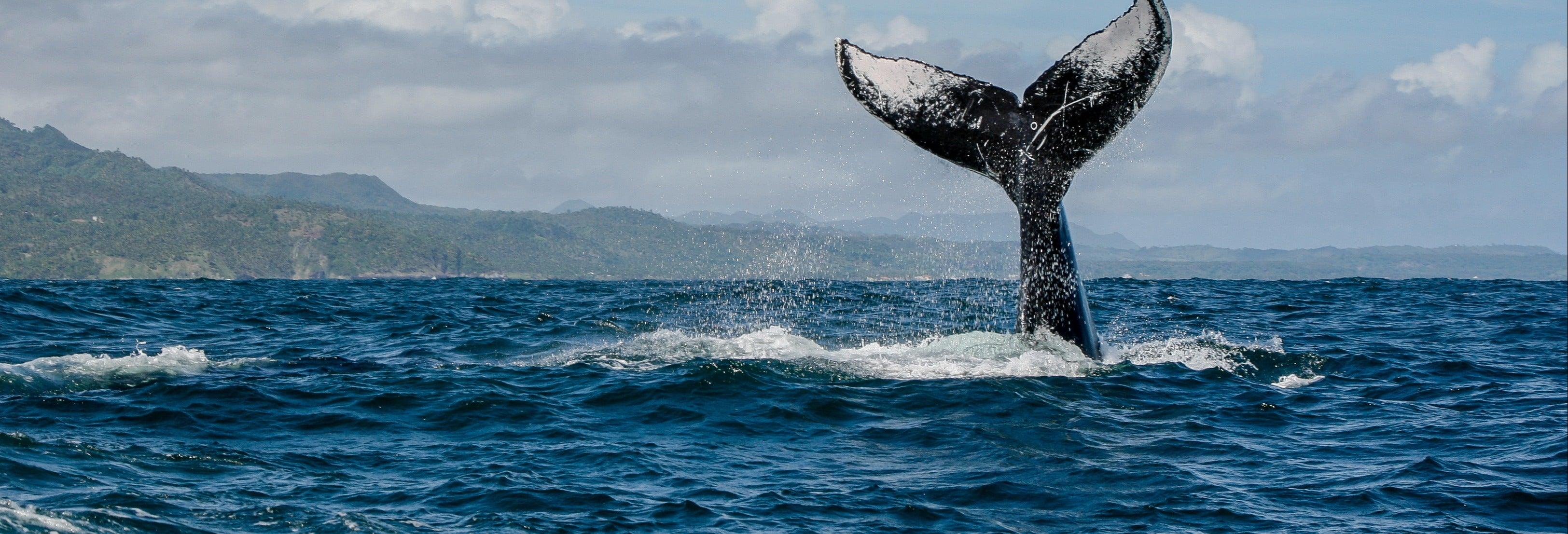 Observation de baleines en bateau à moteur