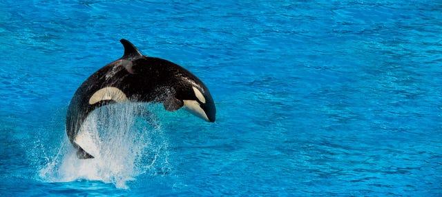 Observation de baleines à Victoria