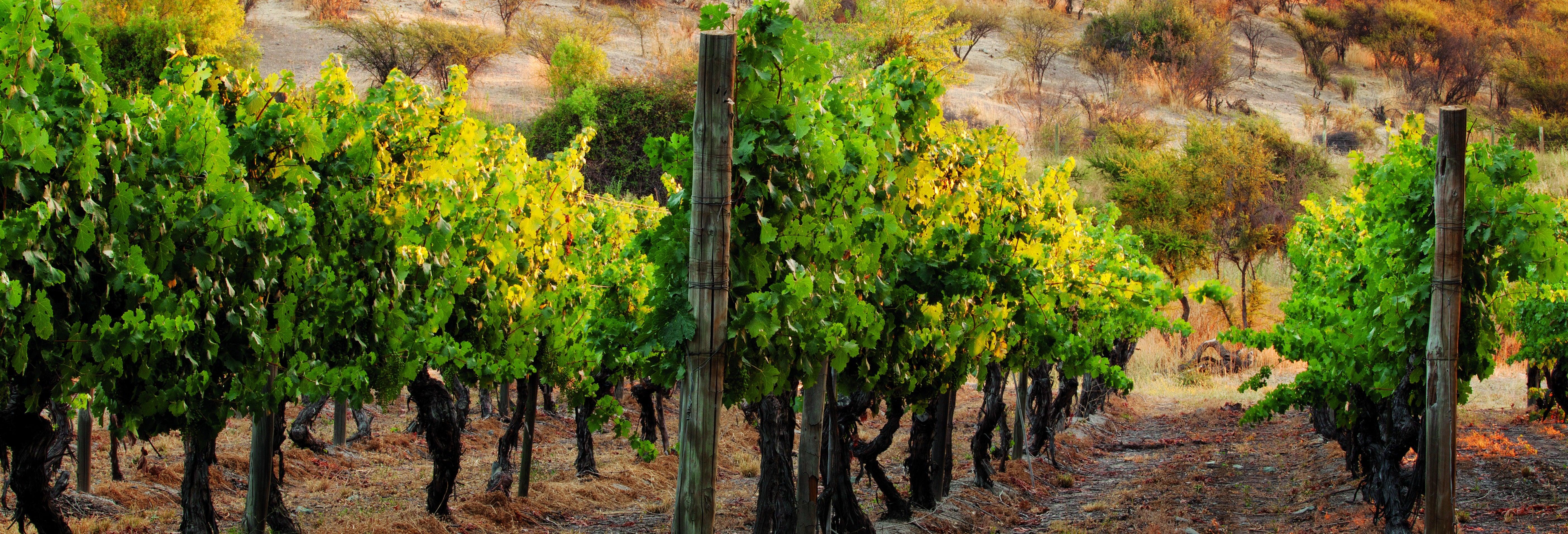 Tour del vino Carménère por la bodega Viña Santa Rita