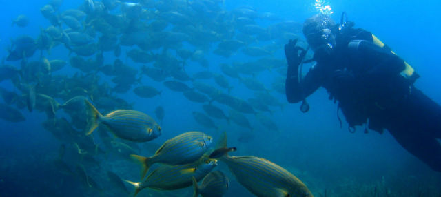 Bautismo de buceo en la Isla de Pascua
