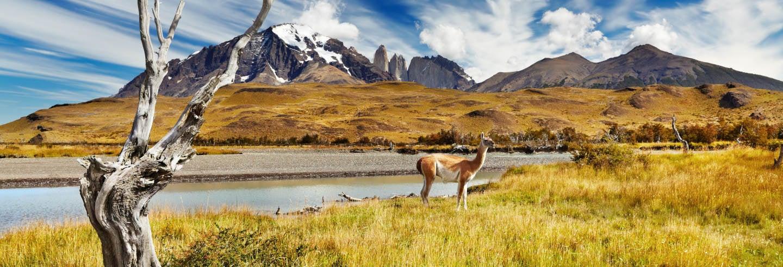 Safari dans le Parc National Torres del Paine