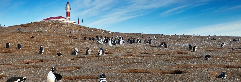 Avistamiento de pingüinos en isla Magdalena