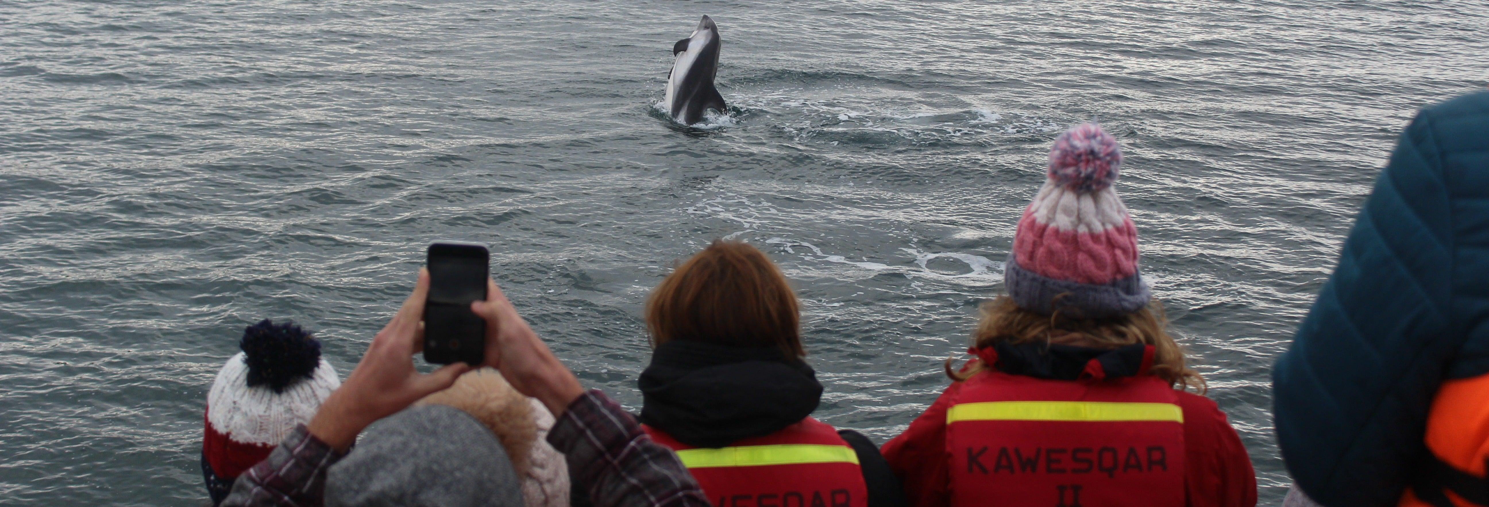 Avistamiento de delfines en la isla Tranqui