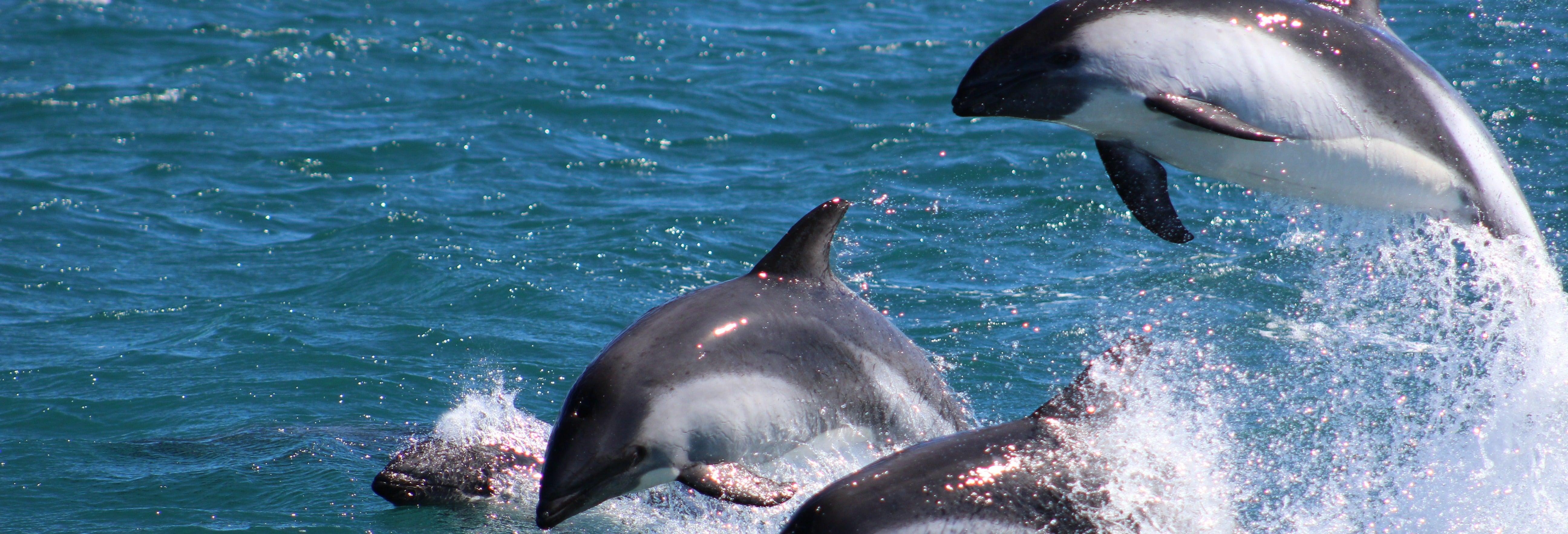 Paseo en barco con avistamiento de pingüinos y delfines