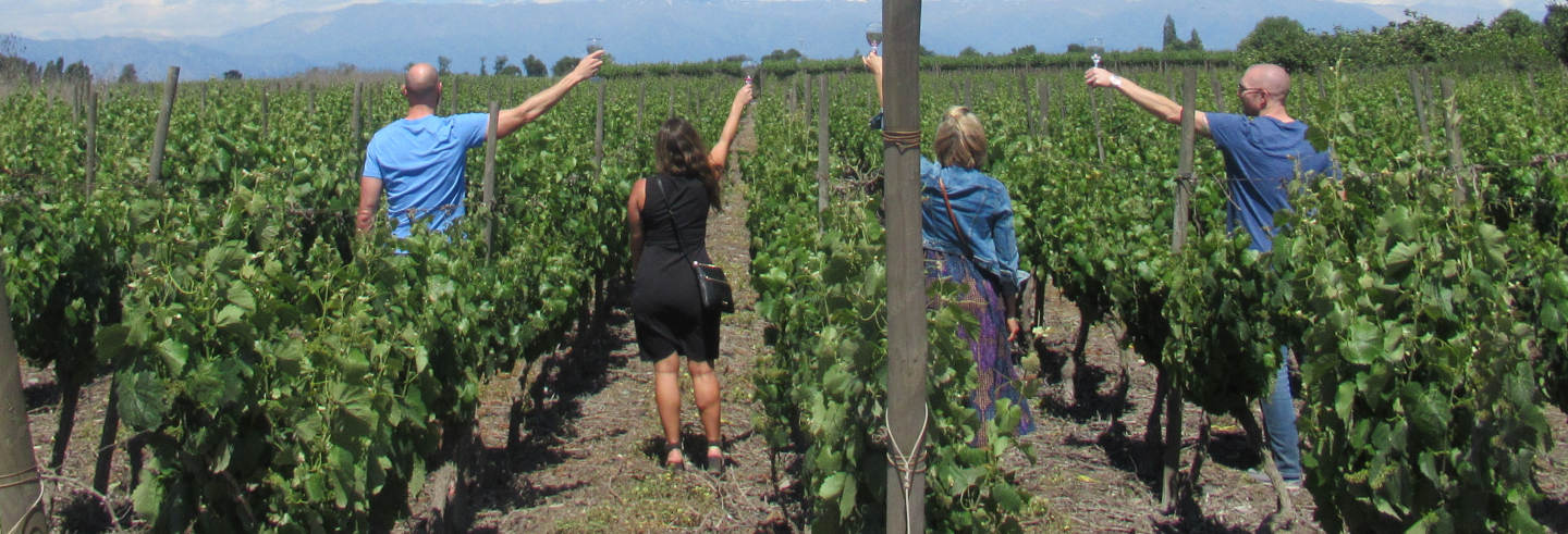 Visite des vignobles et caves à vin de Isla de Maipo