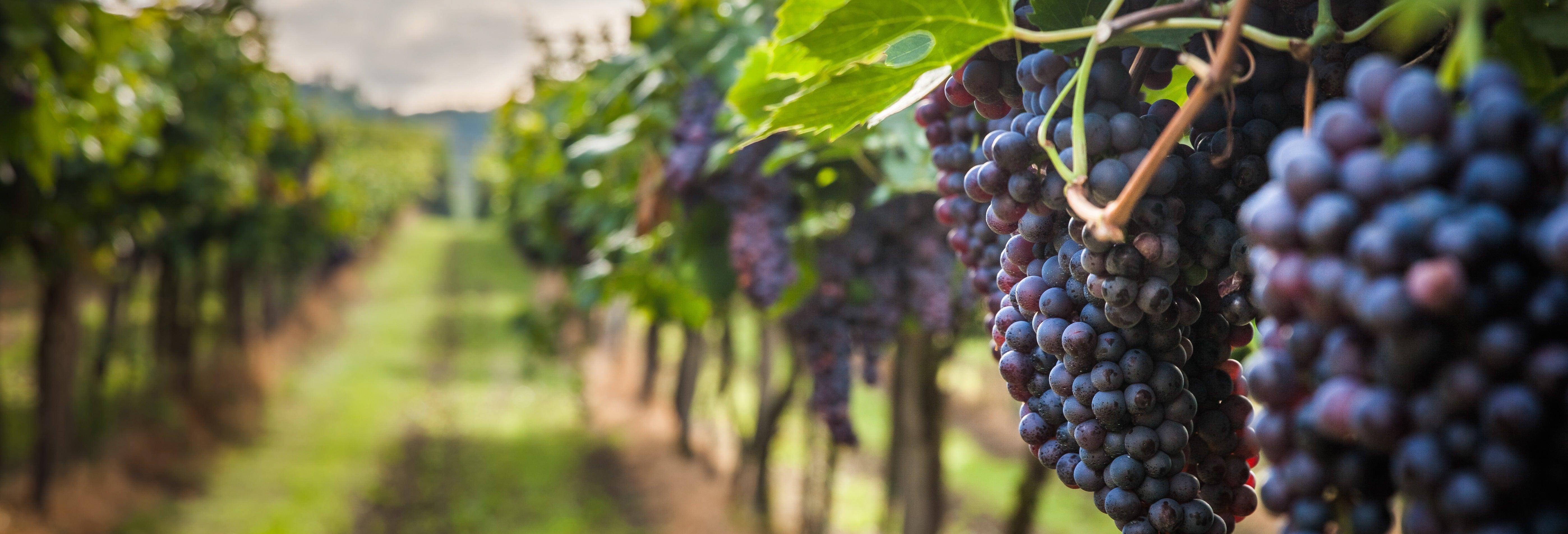 Visita à vinícola Cousiño Macul