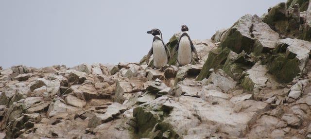 Excursión a la Reserva Nacional Pingüino de Humboldt