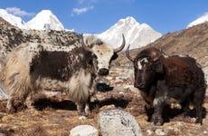 Circuito de 8 días por lo mejor de Tíbet