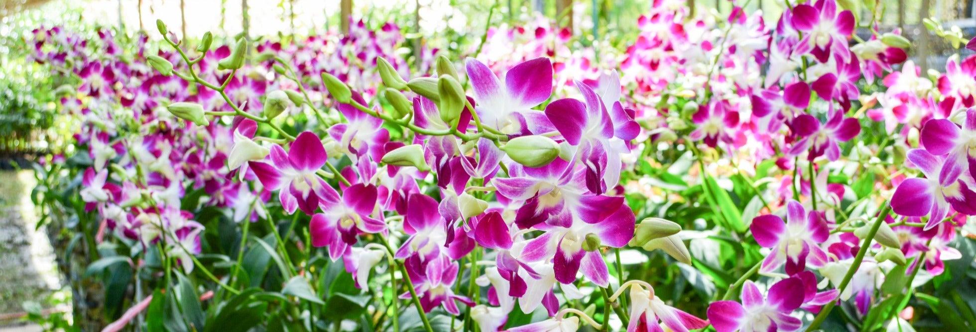 Tour de las orquídeas