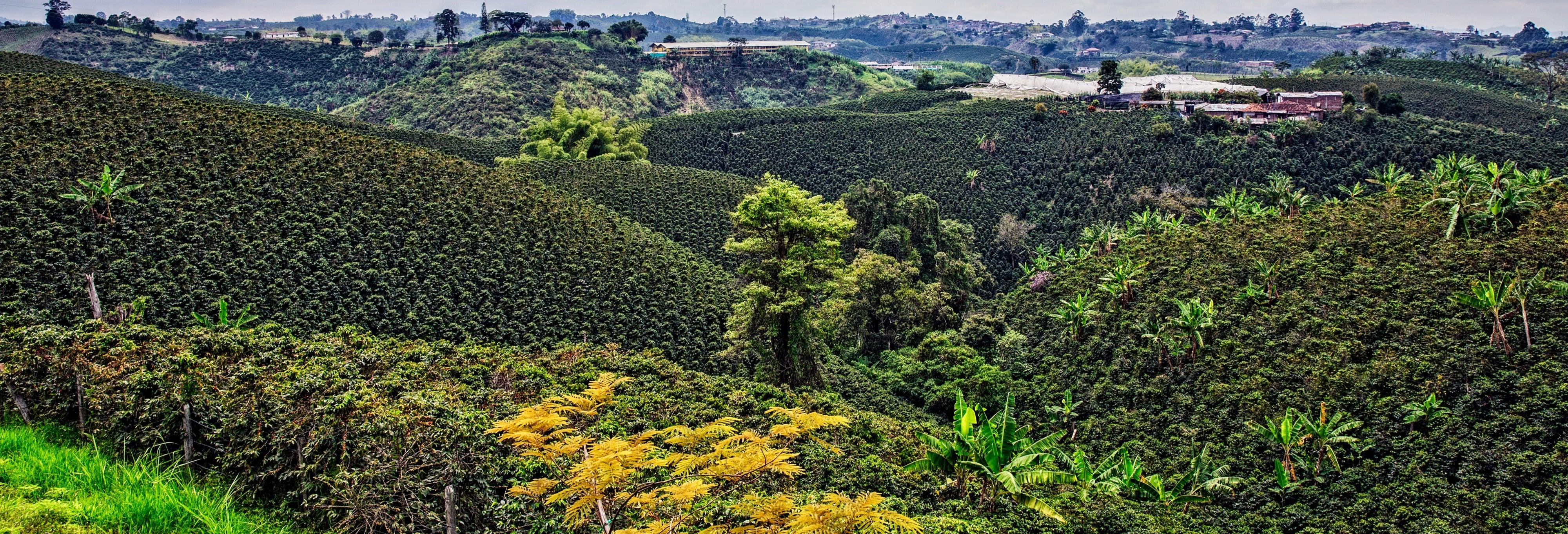 Tour por las plantaciones de café del Quindío