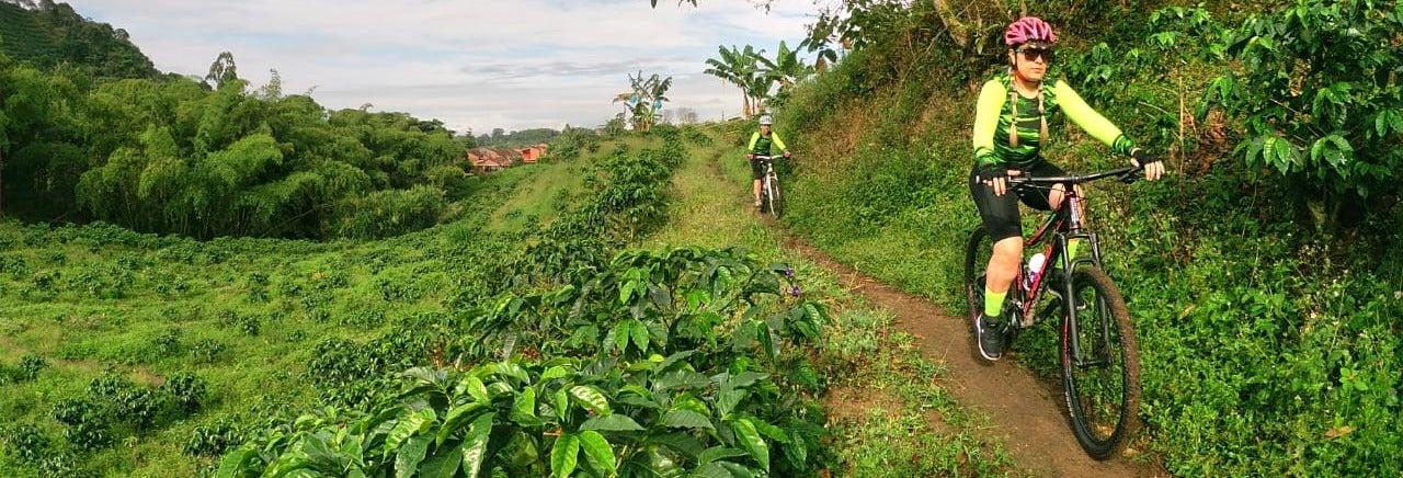 Tour del café en bicicleta