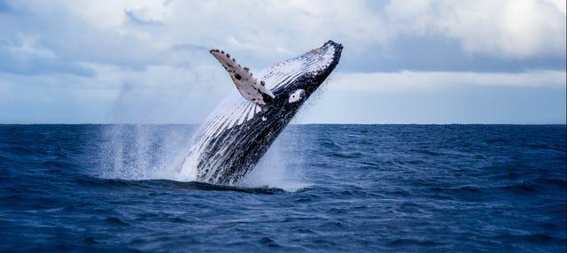 Avistamento de baleias na baía Málaga