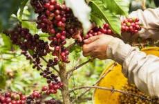 Coffee Farm Tour