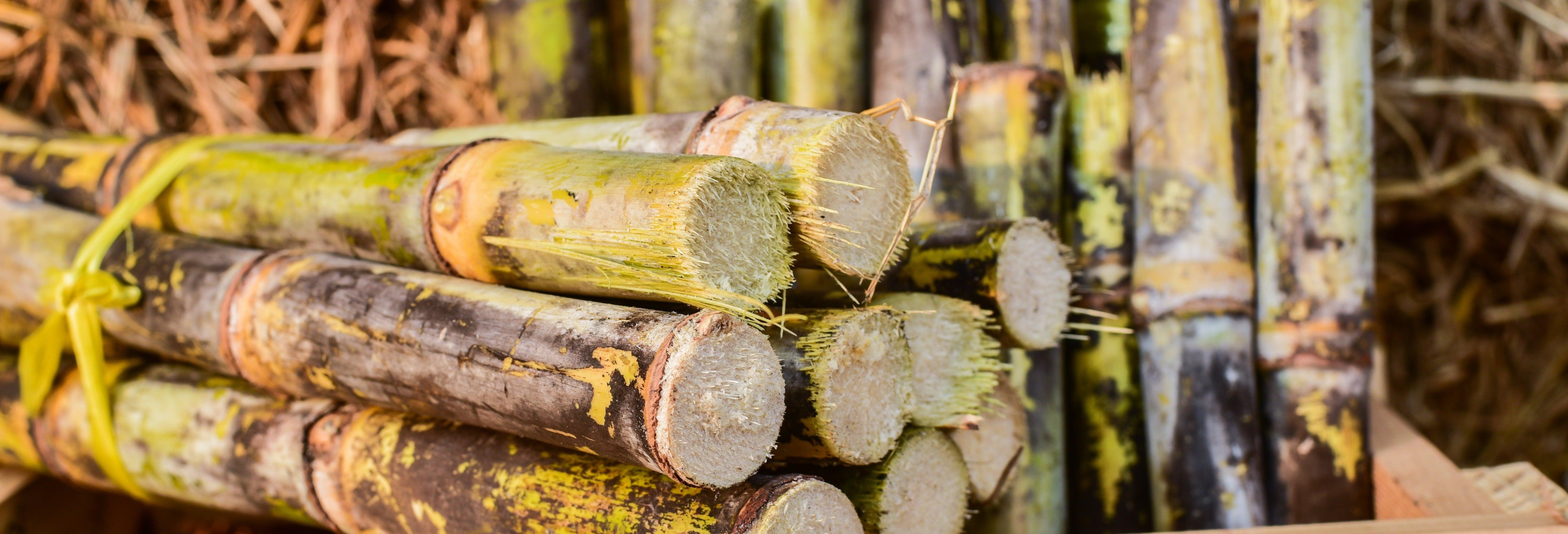 Tour por las haciendas de caña de azúcar del valle del Cauca