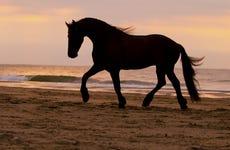 Paseo a caballo por la playa + Rancho tradicional