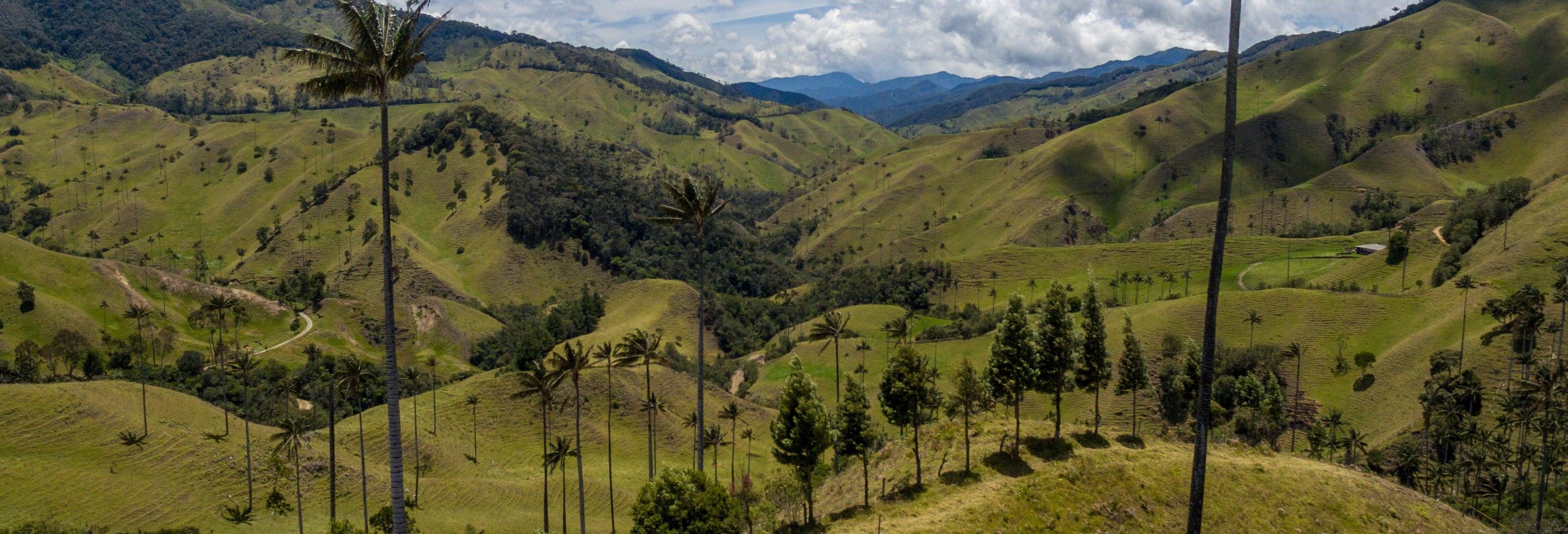 Excursión al valle de Cocora + Paseo a caballo