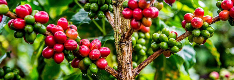 Tour del café por Guatapé