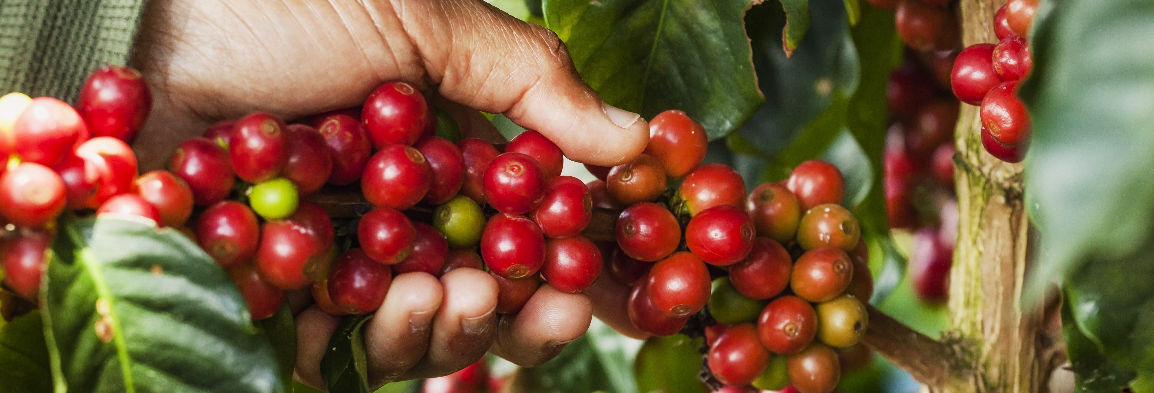 Tour del café por Jardín