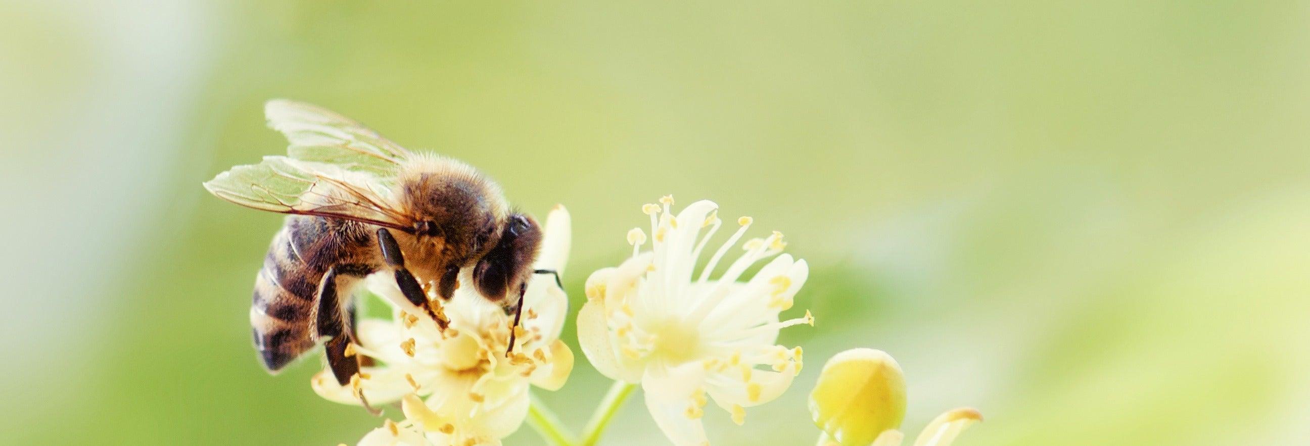 Tour de la miel por Jardín