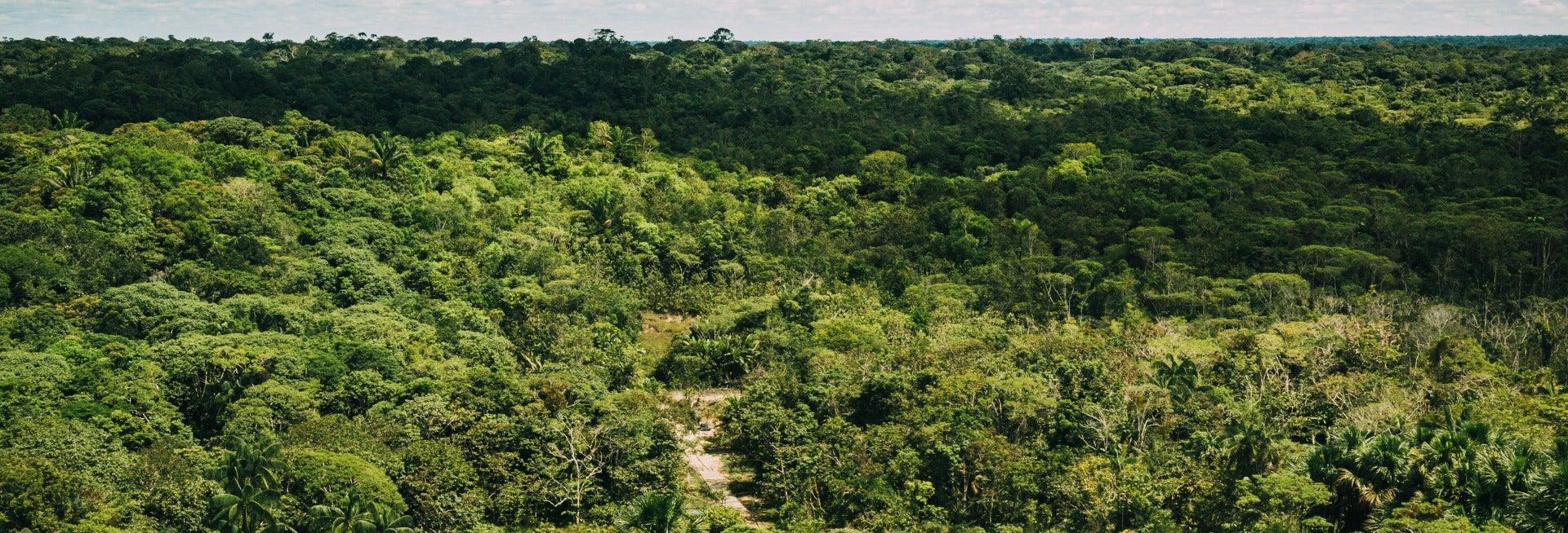 Senderismo por la selva amazónica