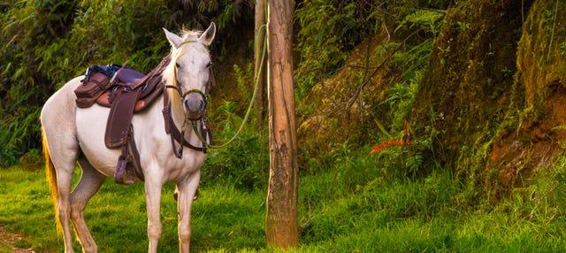 Paseo a caballo con música por las fondas de Caldas