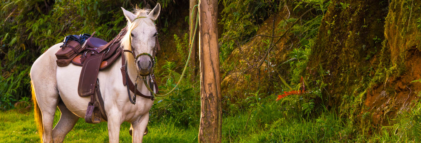 Caldas Horseback Ride with Music