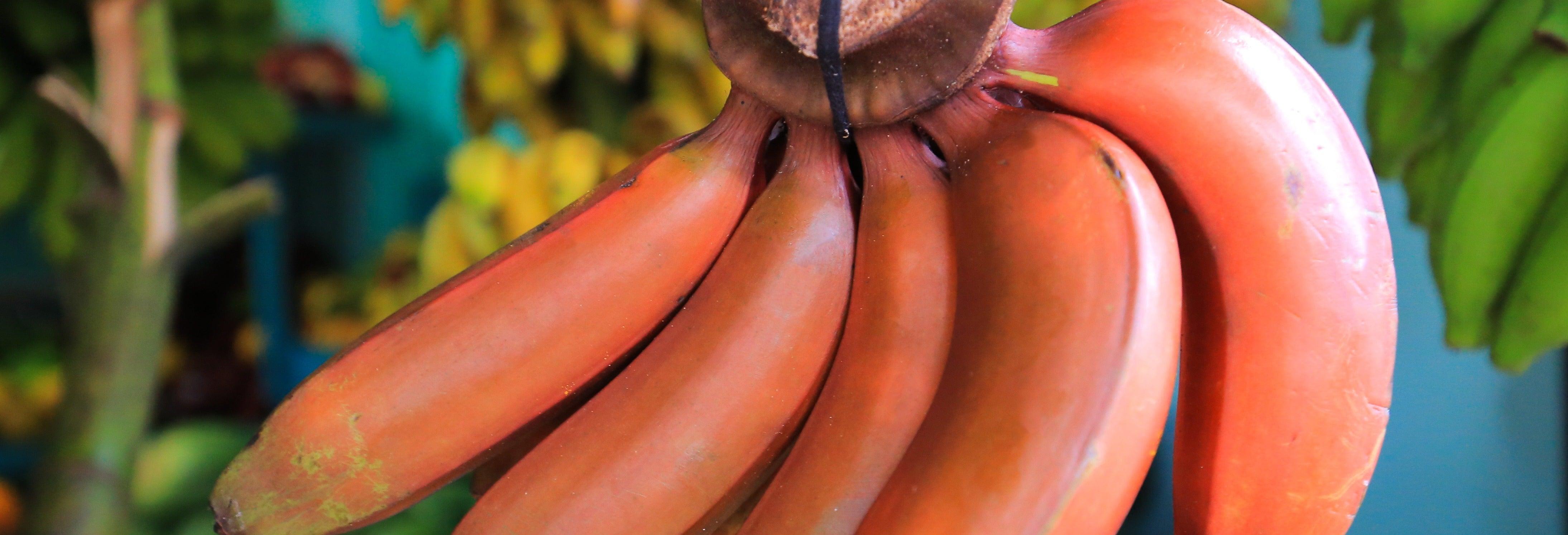 Tour del banano