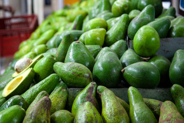 Aguacates colombianos