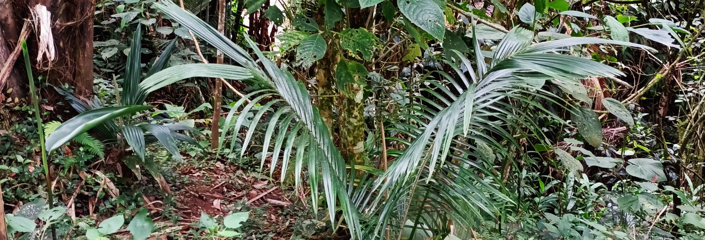 Escursione privata alla riserva delle palme da cera di Tochecito