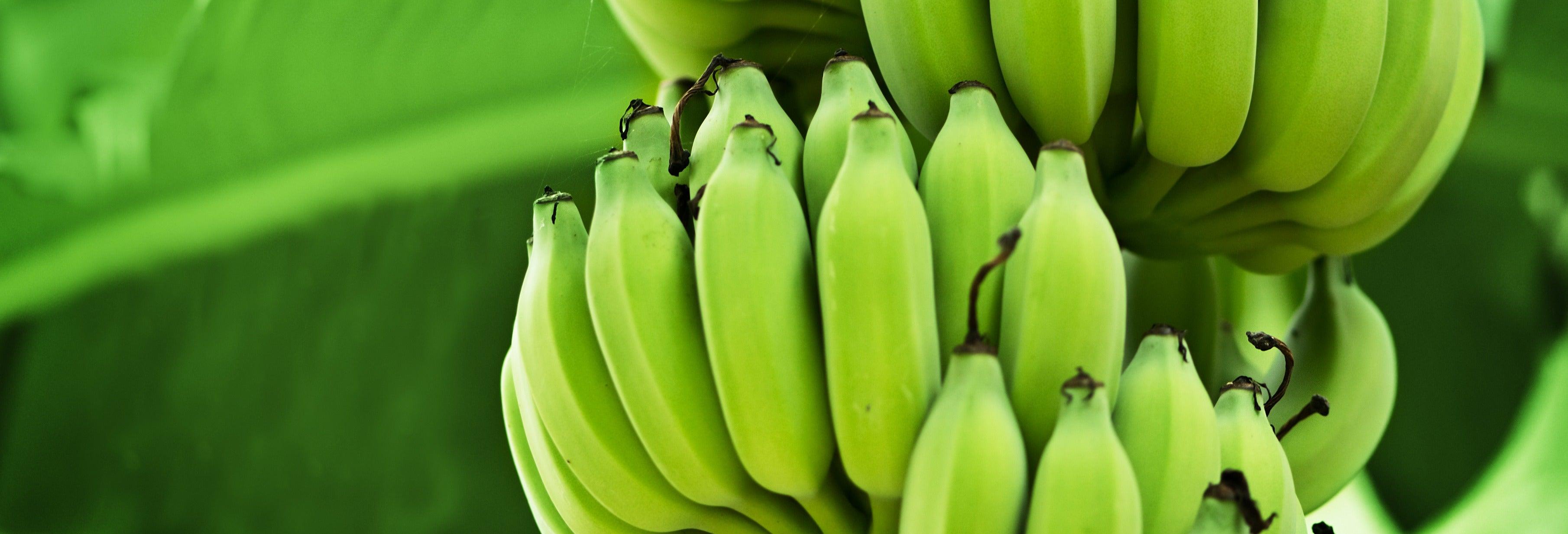 Escursione a Zona Bananera
