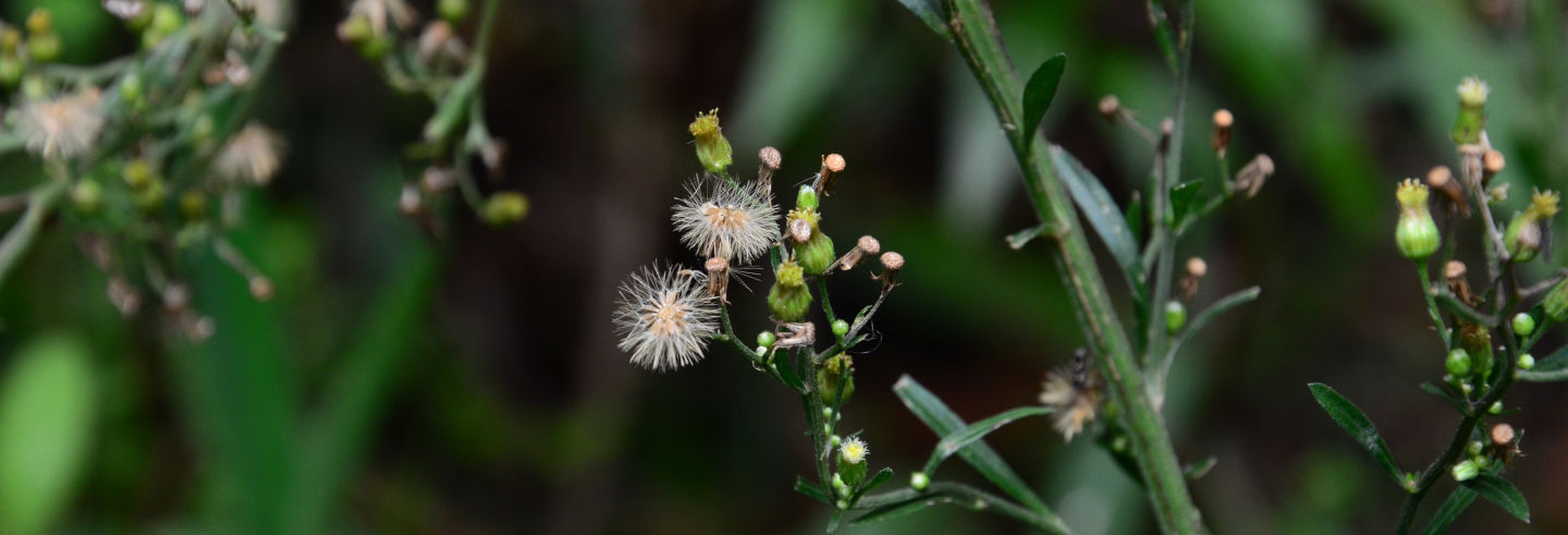 Senderismo por el Santuario de Fauna y Flora Iguaque