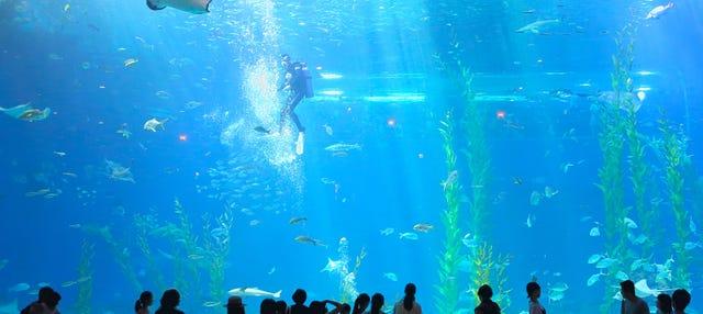 Entrada al Aqua Planet Jeju