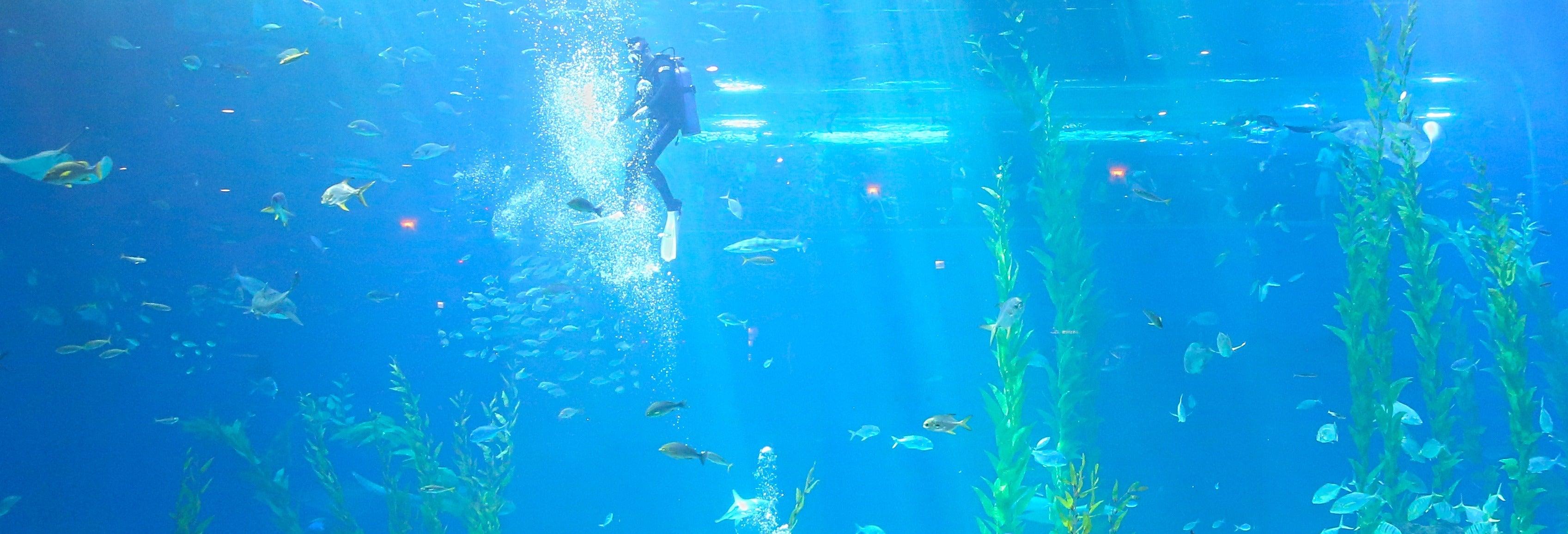 Billet pour l'Aqua Planet Jeju