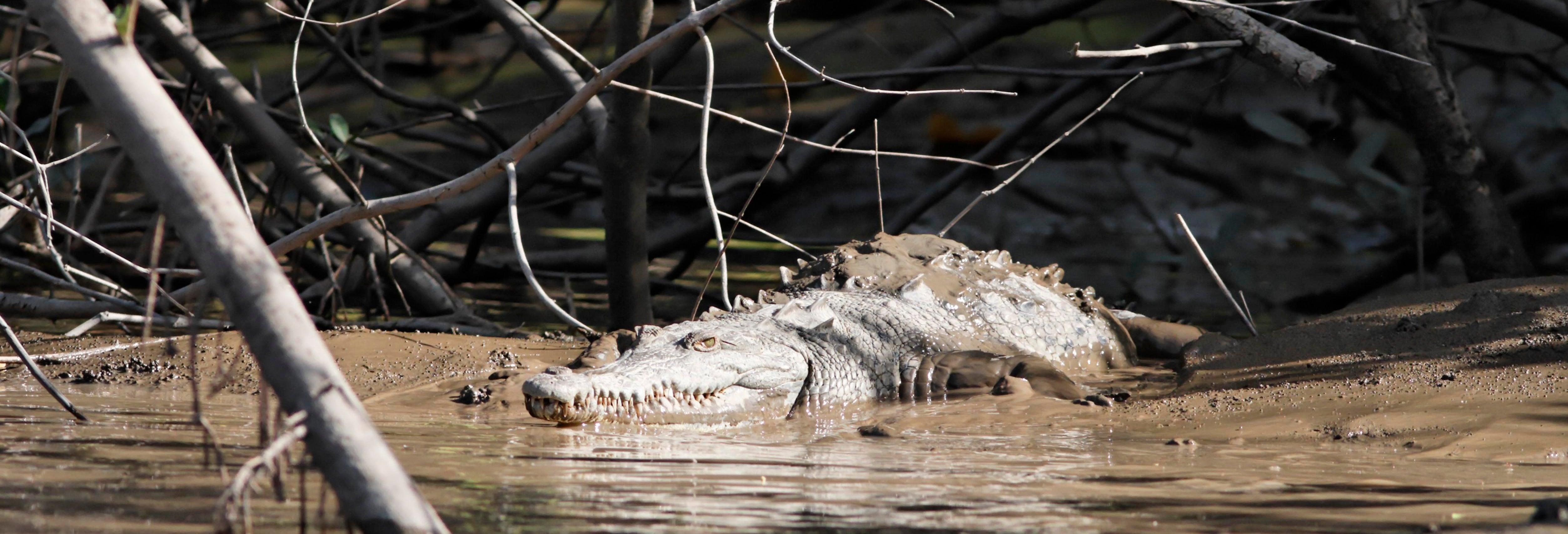 Palo Verde National Park Tour