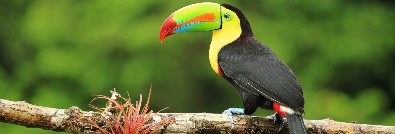 Funivia del Rainforest Pacific Park