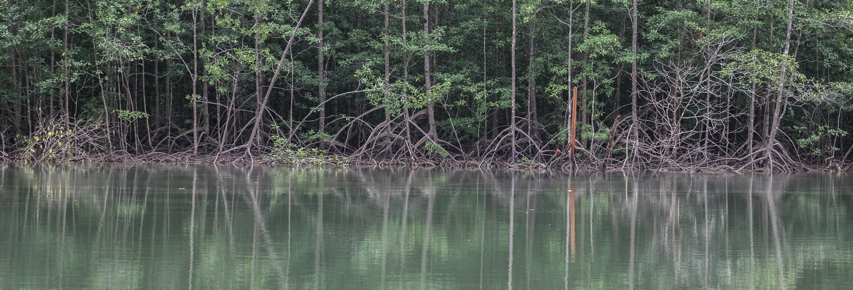 Tour pelos manguezais do Parque Nacional Manuel Antonio