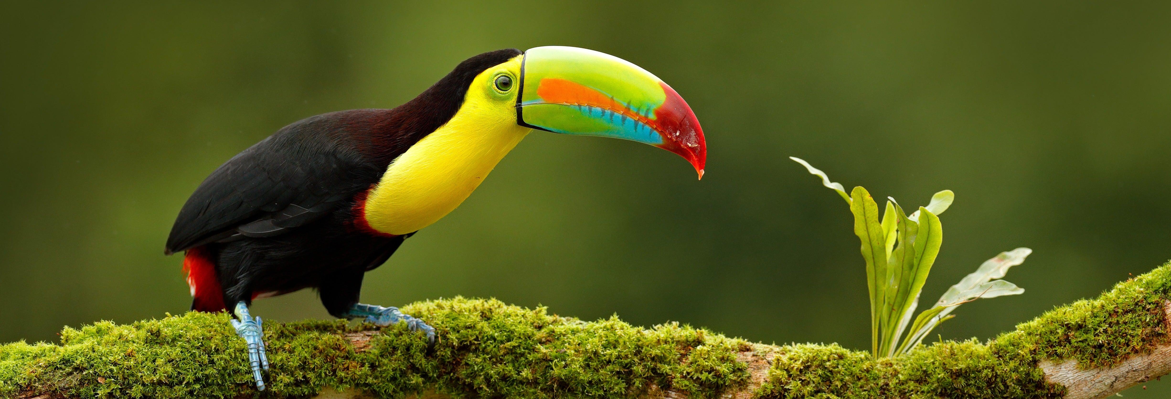 Circuito de 13 días por Costa Rica