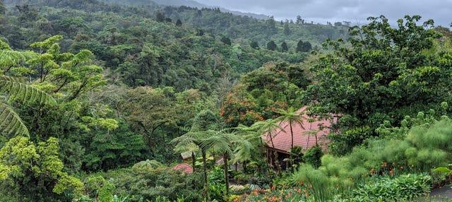 Tour de aventura no bosque chuvoso