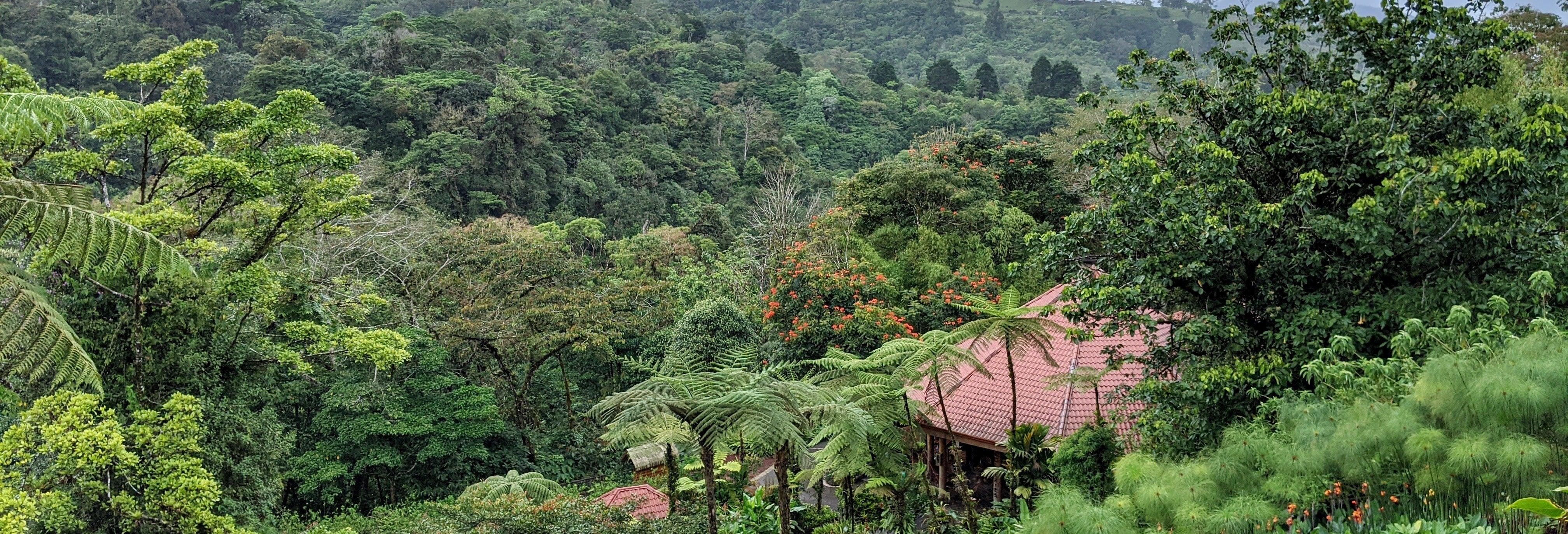 Tour di avventura nella foresta pluviale