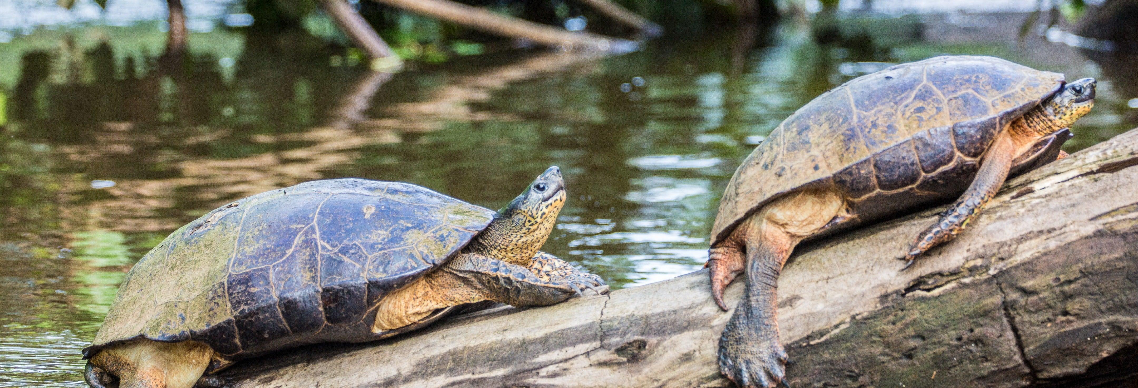 Tortuguero National Park Trip