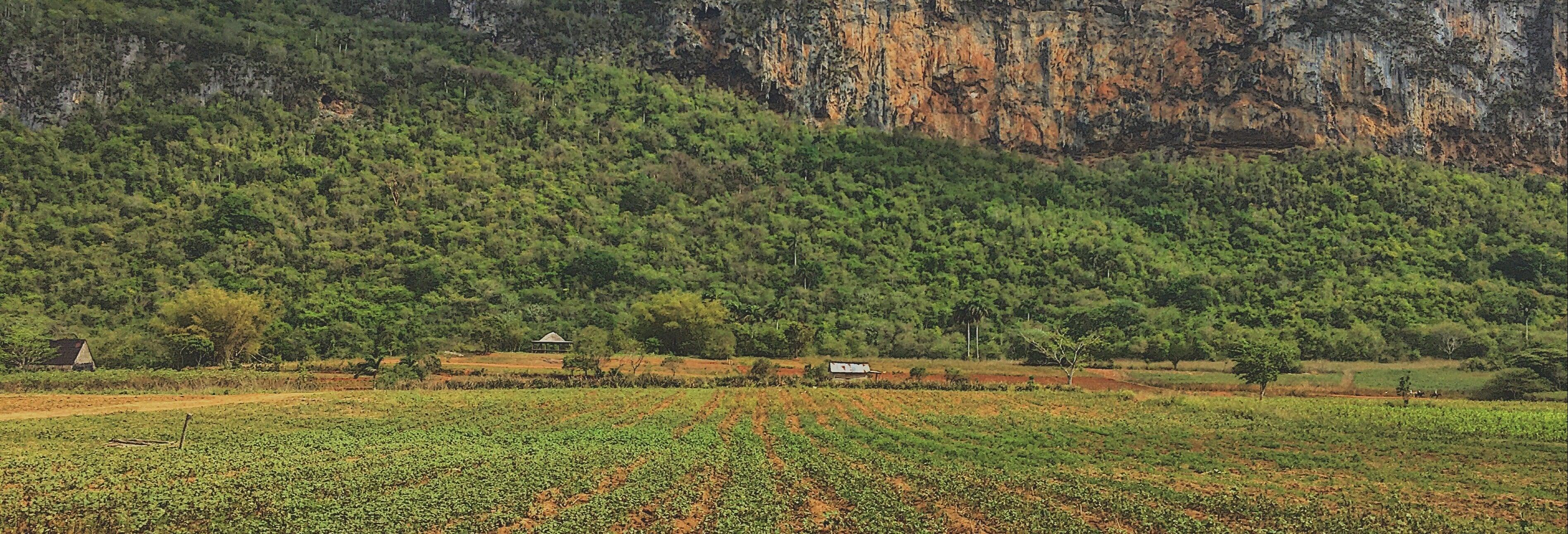 Trilha pelo Valle de Palmarito