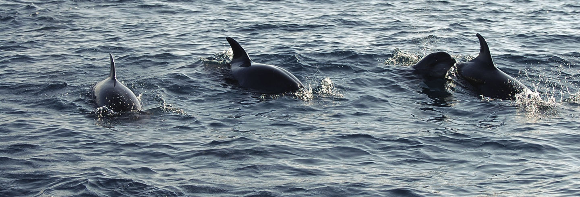 Excursión a Puerto El Morro con avistamiento de delfines