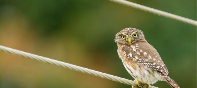 Excursión a la reserva ecológica Manglares Churute