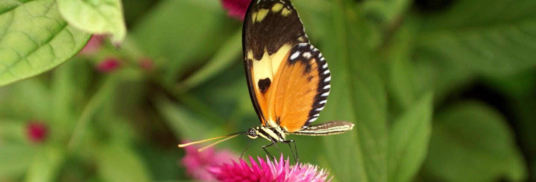 Billet pour la Ferme aux papillons de Mindo