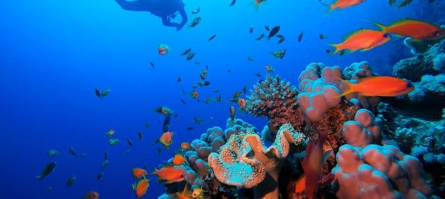Bautismo de buceo en el Mar Rojo