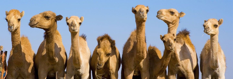 Escursione a Al Ain