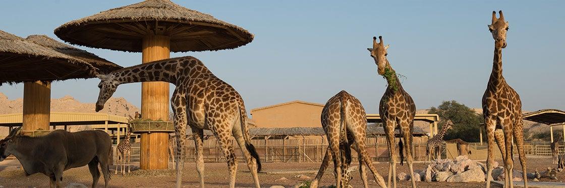 Zoo de Dubaï