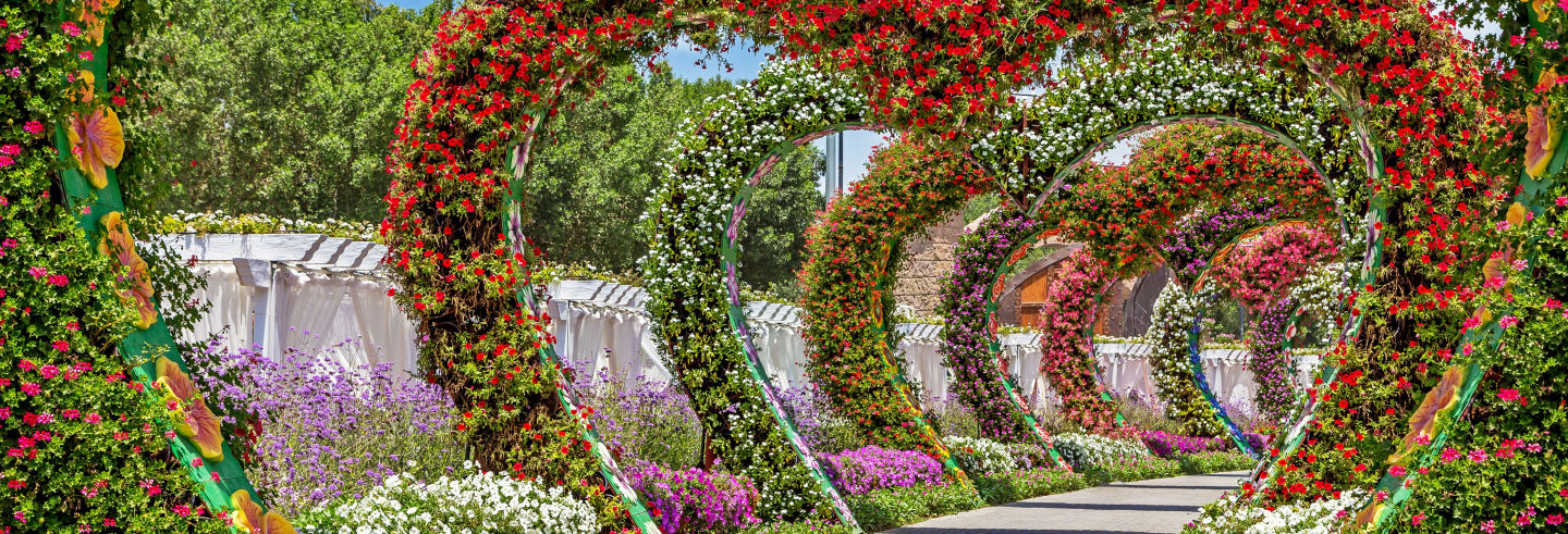 Dubai Butterfly & Miracle Gardens Tour