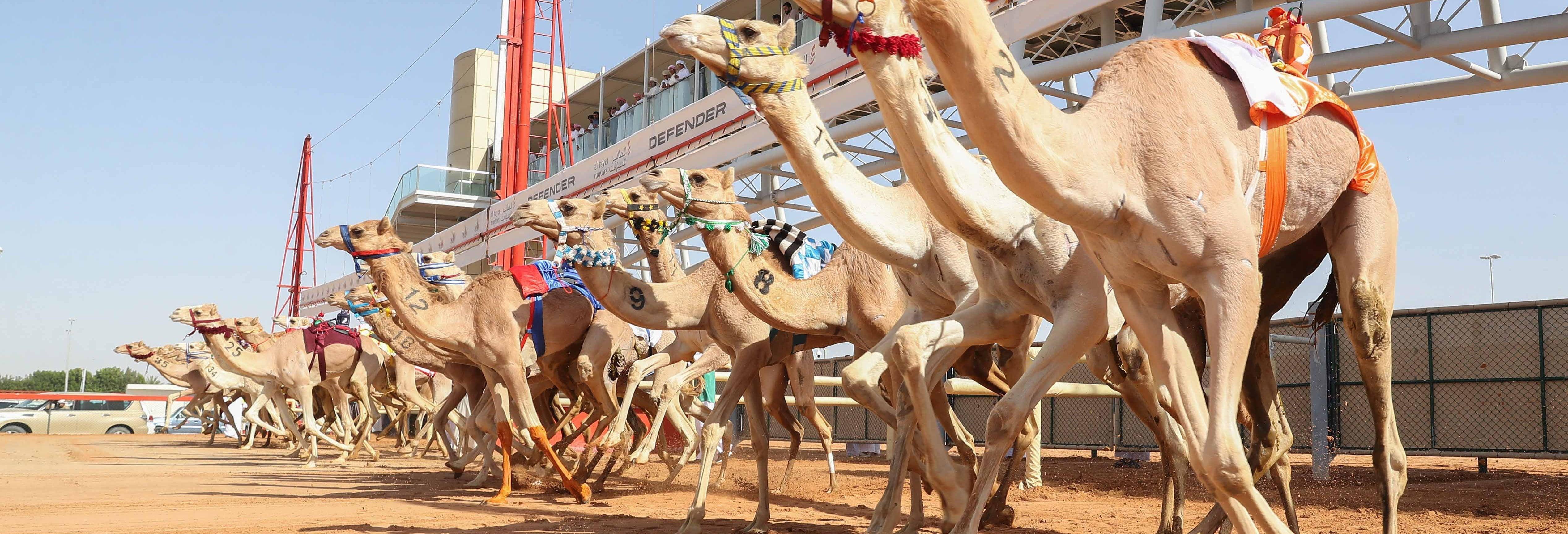 Visita al Royal Camel Racing Club