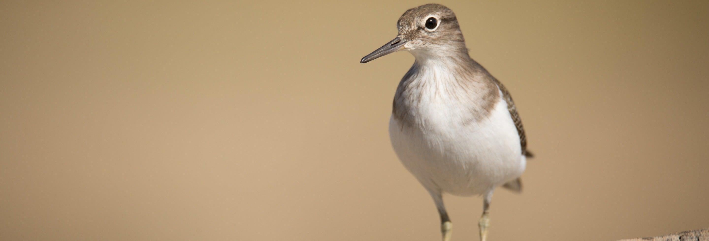 Avistamiento de aves en la Sierra de Aracena